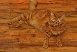 Red Cat on the  Red Floor